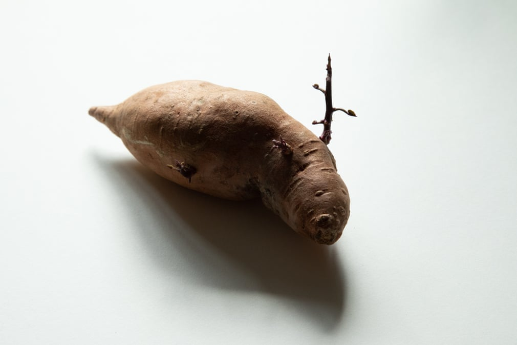 смешная картошка