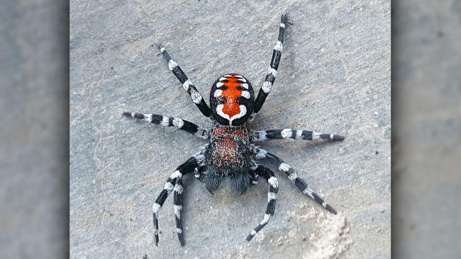 Новый вид пауков назвали в честь звезды фильма «Джокер»