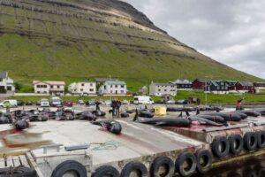 Кровавая традиция: на Фарерских островах убили 250 дельфинов