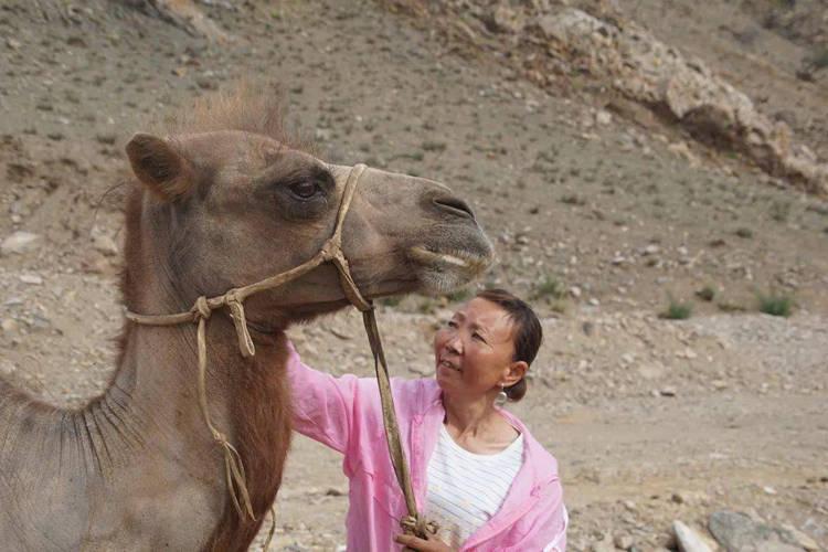 Верблюдица прошла 100 км по степям, чтобы вернуться к бывшим хозяевам