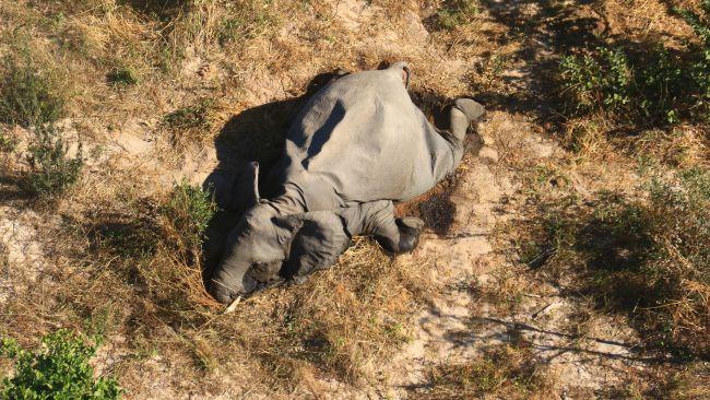 Почему погибают слоны в Ботсване: новая версия.Вокруг Света. Украина