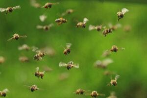 В США семья не знала, что пять лет живет с тысячами пчел