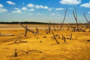 В Южной Америке – самые разрушительные засухи за 600 лет