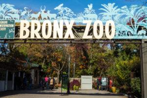 Животные в зоопарке Нью-Йорка переболели разными штаммами коронавируса