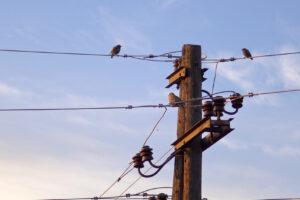 Перелетные птицы изменили сроки миграции из-за потепления
