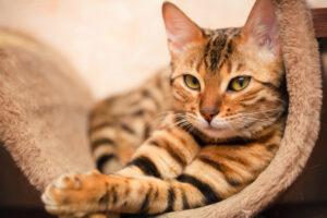 Найдены останки самой древней домашней кошки в Средней Азии