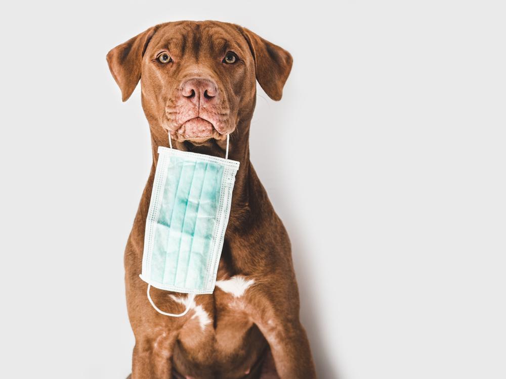 В ОАЭ больных COVID-19 людей ищут собаки
