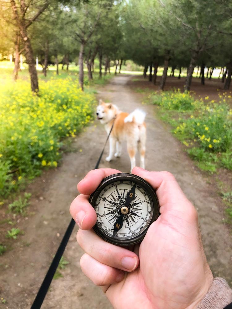 Собаки ориентируются по магнитному полю Земли