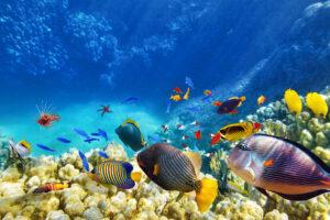 До конца века на планете могут погибнуть сотни видов рыб