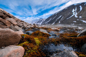 На Шпицбергене зафиксировали рекордную температуру