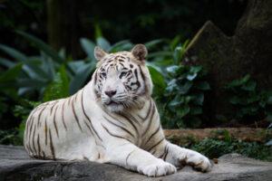 Биологи выяснили, каким животным люди охотнее жертвуют деньги