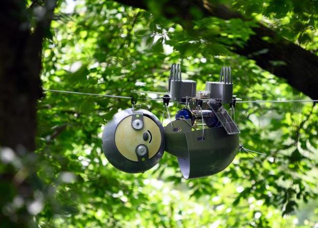Американские инженеры разработали робота-ленивца.Вокруг Света. Украина