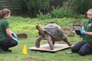 Лондонский зоопарк взвесил животных