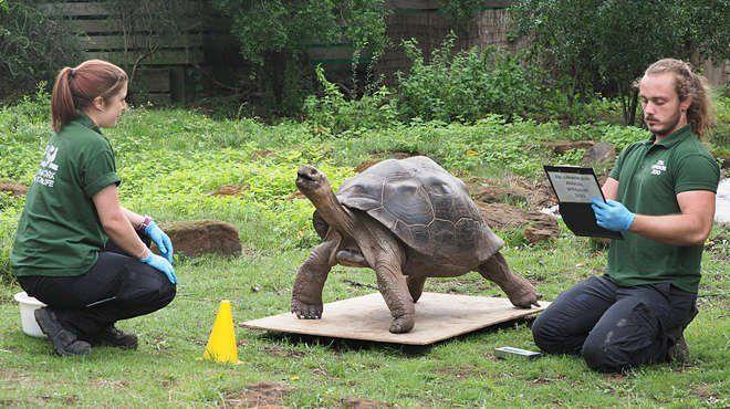 Лондонский зоопарк взвесил животных.Вокруг Света. Украина