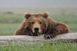 В США посоветовали туристам не скармливать друзей медведям