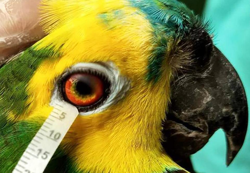 Селезы птиц и рептилий очень похожи на человеческие