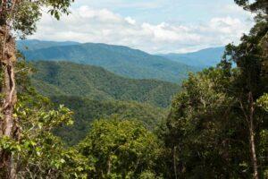 Ботаники определили остров с наибольшим разнообразием растений