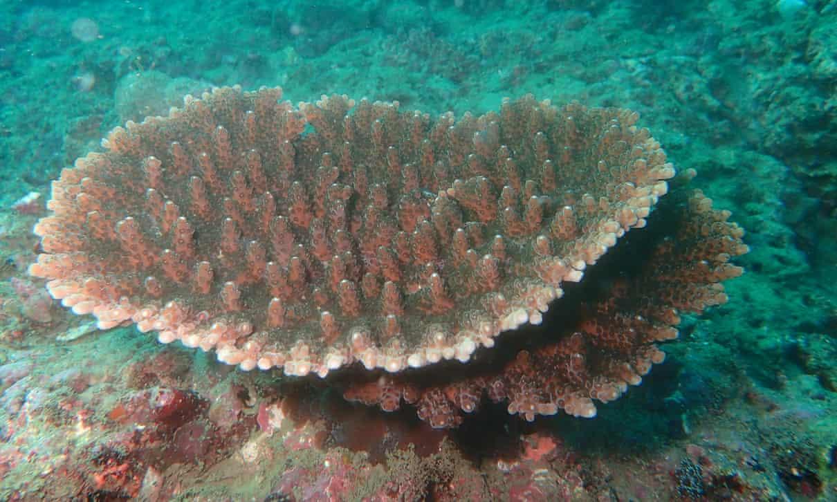 Из Токийского залива исчезают водоросли и морские ушки