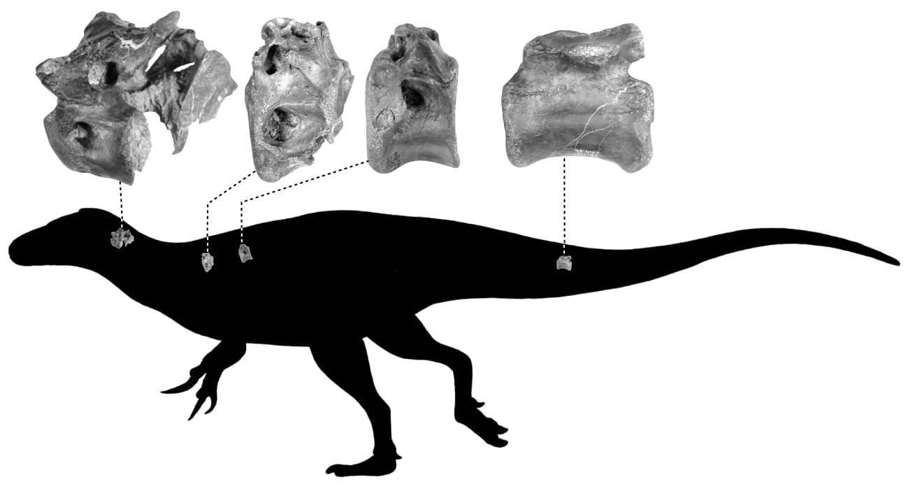 Vectaerovenator inopinatus