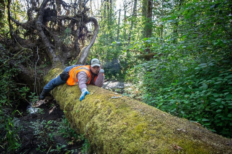 Натуралист поставил фотоловушку на рысь, а поймал лесника