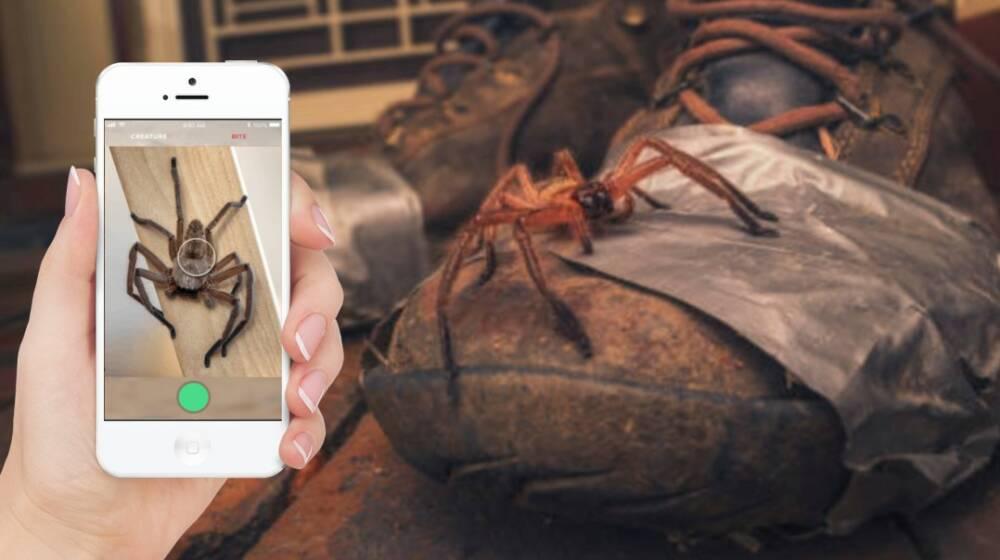 В Австралии тестируют приложение, распознающее пауков и змей.Вокруг Света. Украина