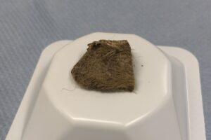 Генетики узнали, чем пообедал щенок из плейстоцена