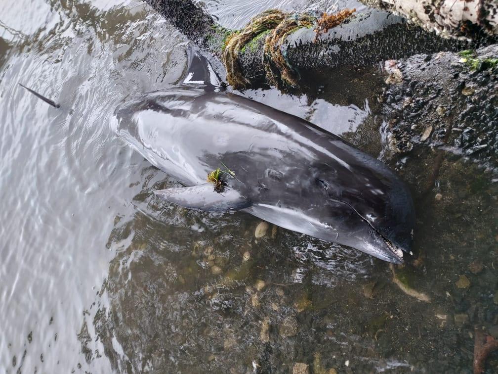 В Индийском океане из-за разлива нефти массово погибли дельфины.Вокруг Света. Украина