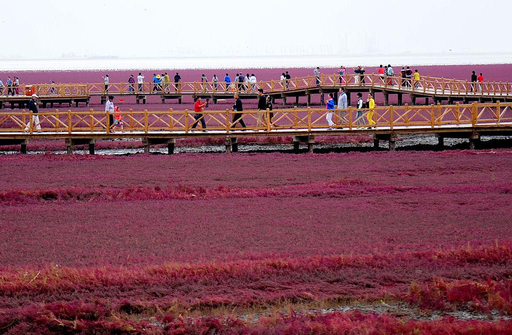 В Китае заповедный пляж превратился в малиновый ковер