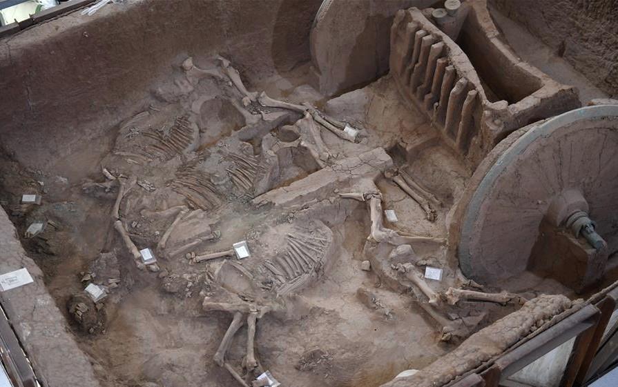 В Китае восстановили роскошную колесницу из древней гробницы.Вокруг Света. Украина
