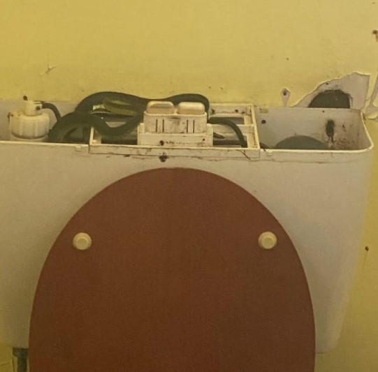 Австралийка нашла в туалетном бачке четырех змей