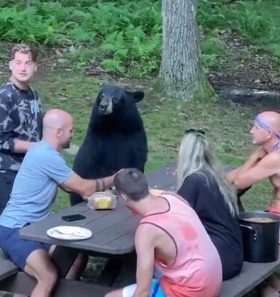 Медведь пришел из леса на пикник