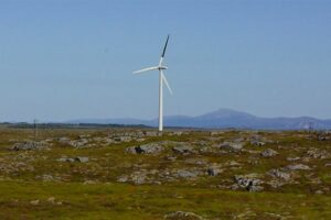 Найден простой способ снизить смертность птиц из-за ветряных электростанций