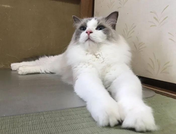 В Японии отель предлагает гостям пожить с кошками, прежде чем их заводить.Вокруг Света. Украина