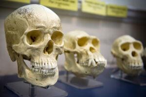 Люди унаследовали ДНК неизвестного древнего предка