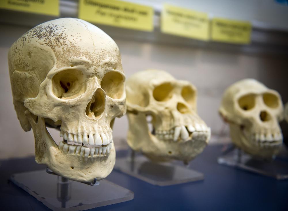 Люди унаследовали ДНК неизвестного древнего предка.Вокруг Света. Украина