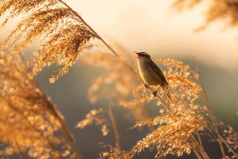 Пение птиц по утрам оказалось зарядкой.Вокруг Света. Украина