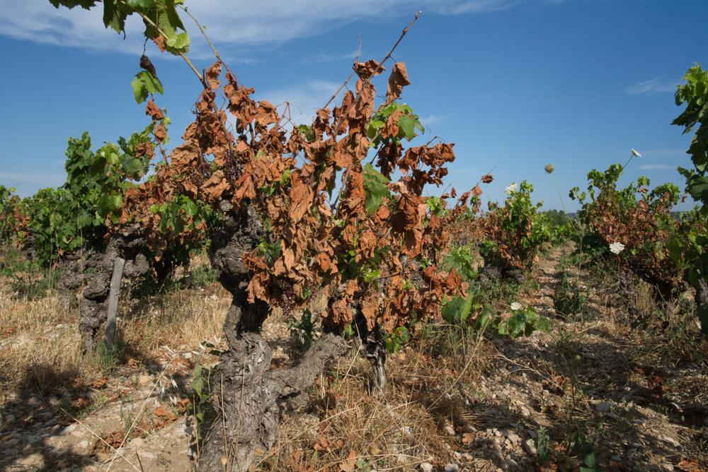 Франция ограничивает потребление воды из-за засухи