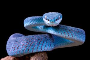 Люди способны определять ядовитых змей инстинктивно: исследование