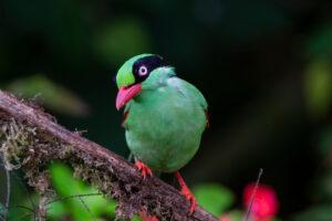 Тропические птицы перестают размножаться в засушливые периоды