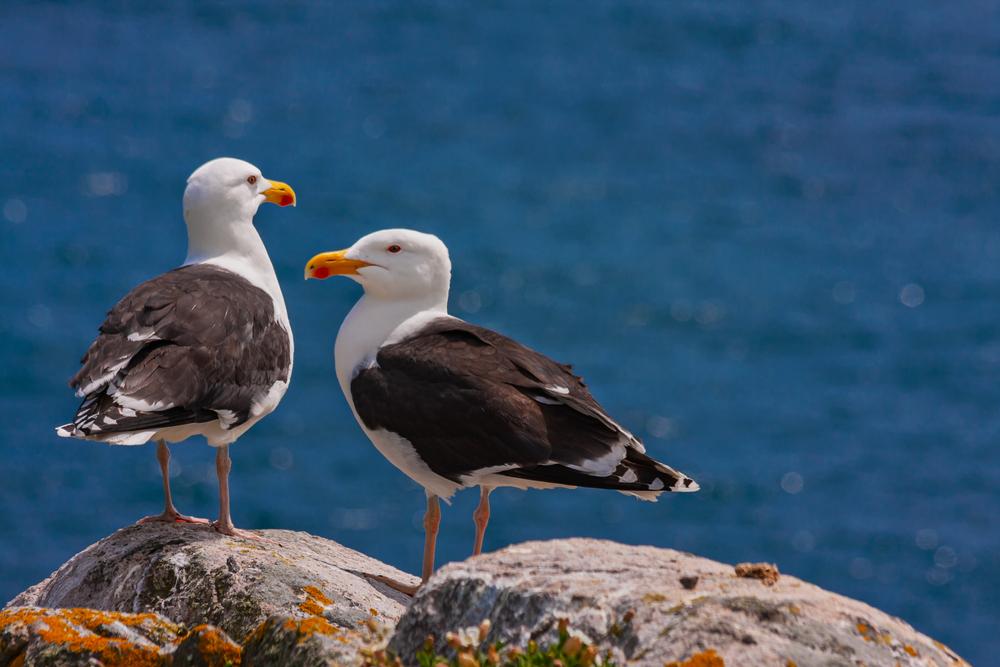 Фекалии морских птиц стоят миллионы долларов – экологи