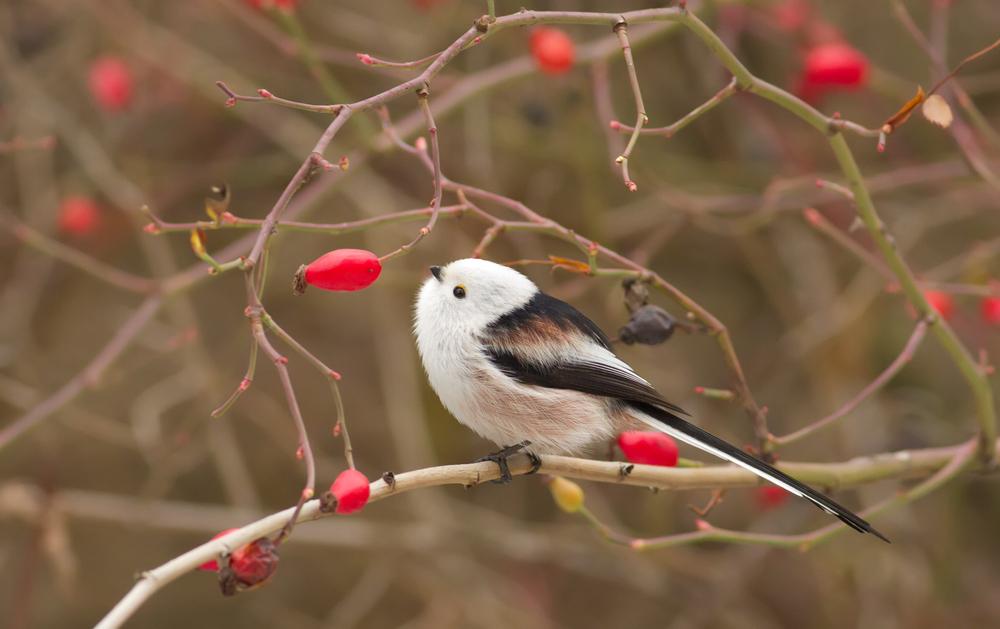 Взломщик кодов военной поры помог понять поведение птиц