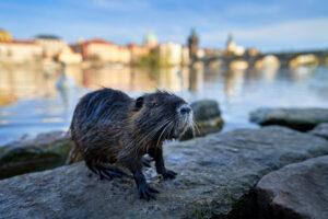 Рост городов способствует распространению вирусов животными