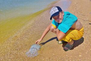 Чем опасны медузы и морские блохи на Азовском море?