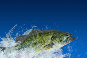 В США водитель сбил на дороге рыбу