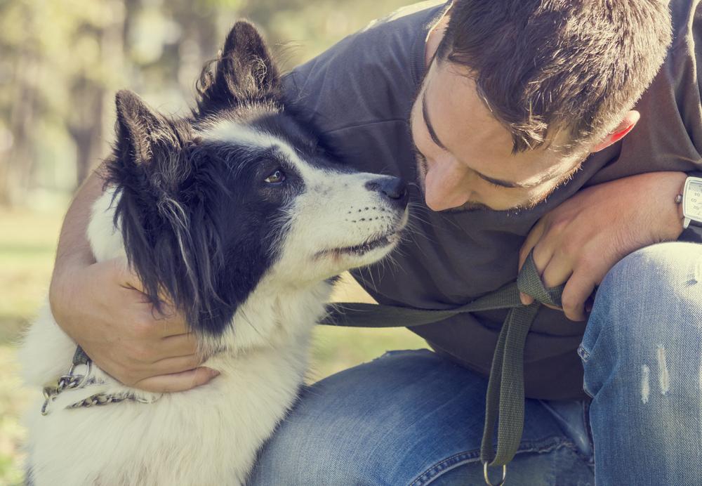 В мозгу собак устная речь обрабатывается так же, как в человеческом.Вокруг Света. Украина