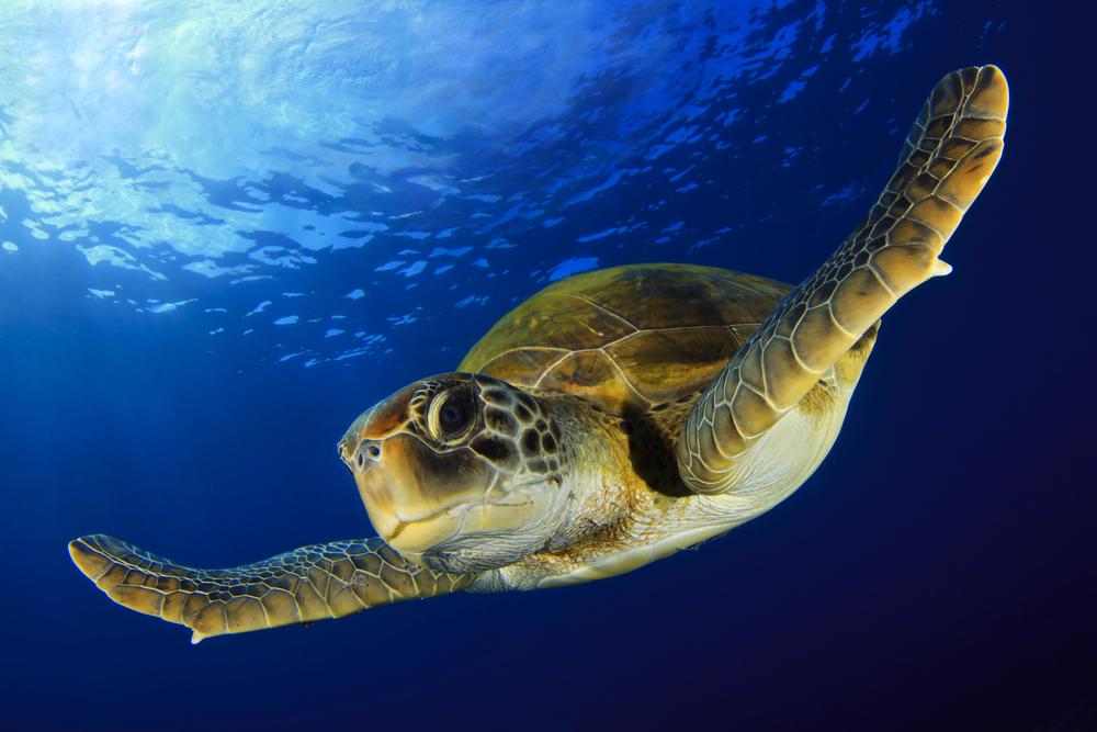 Сколько живут черепахи?.Вокруг Света. Украина