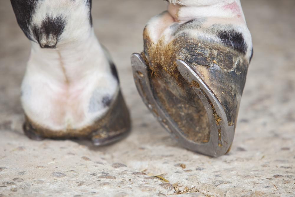 Зачем лошадям подковы.Вокруг Света. Украина