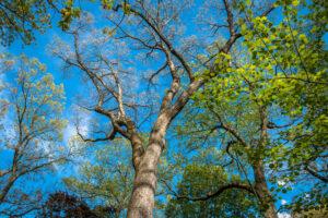 Из-за изменения климата деревья растут в два раза быстрее
