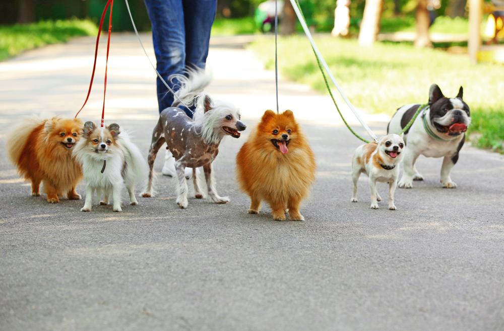 Собак в Германии будут выгуливать по новому закону?