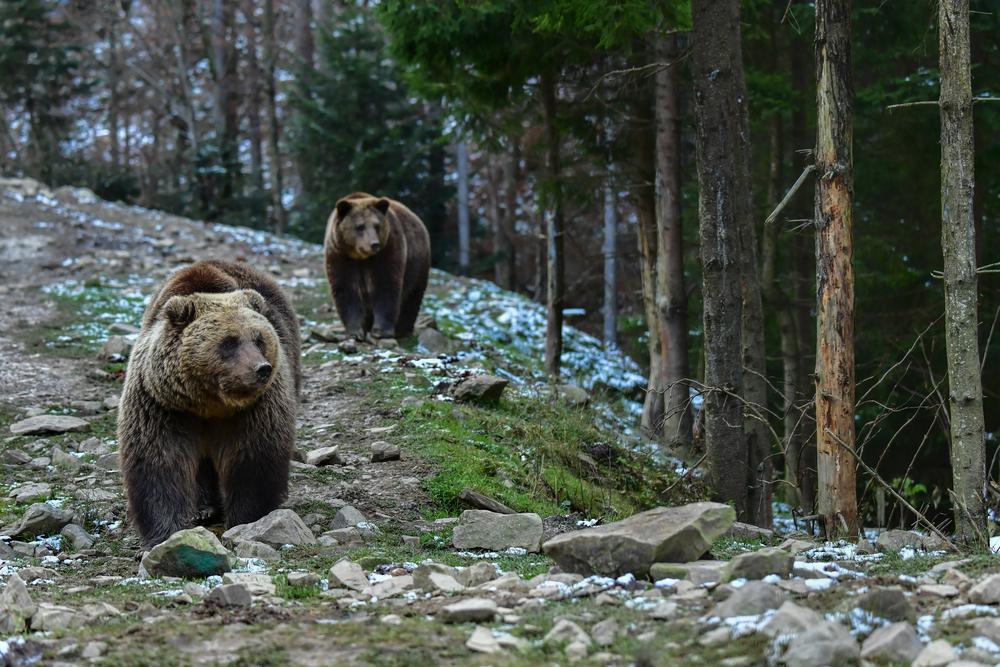 Украинцы высказались против браконьерства - опрос WWF.Вокруг Света. Украина